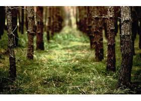 地球,森林,壁纸,(166)图片