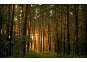 地球,森林,壁纸,(167)图片