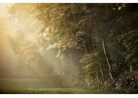 地球,森林,壁纸,(168)图片