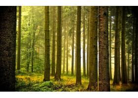 地球,森林,壁纸,(169)图片