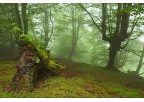 地球,森林,壁纸,(170)图片