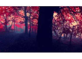 地球,森林,壁纸,(19)图片