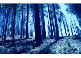 地球,森林,壁纸,(190)图片