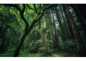 地球,森林,壁纸,(191)图片