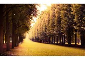 地球,森林,壁纸,(194)图片