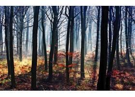地球,森林,壁纸,(195)图片