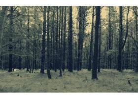地球,森林,壁纸,(196)图片