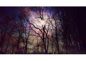 地球,森林,壁纸,(198)图片