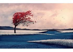 地球,树,树,壁纸,(442)