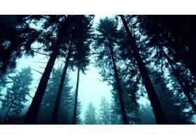 地球,森林,壁纸,(249)