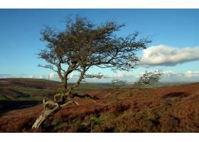 地球,扭曲的,树,壁纸,(56)