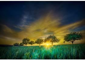 地球,领域,自然,树,日出,风景,云,壁纸,