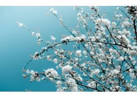 地球,花,花,樱桃,花,樱花,弹簧,壁纸,图片