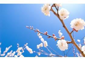 地球,花,花,樱桃,花,自然,弹簧,壁纸,图片