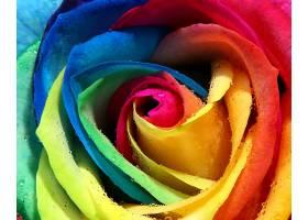 地球,玫瑰,花,壁纸,(442)