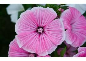 地球,花,花,夏天,紫色,花,壁纸,图片