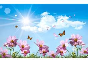 地球,花,花,弹簧,宇宙,蝴蝶,壁纸,图片