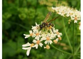 地球,花,花,昆虫,夏天,黄蜂,壁纸,图片