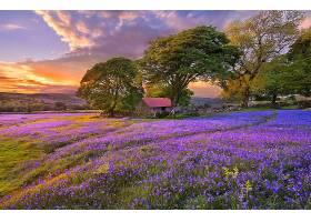 地球,领域,日落,绿色的,自然,树,淡紫色,壁纸,图片