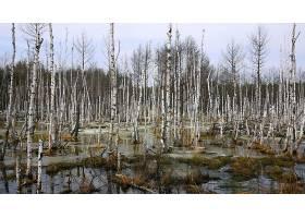 地球,湿地,壁纸,(56)