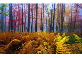 地球,森林,秋天,蕨,雾,自然,树,壁纸,图片