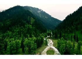地球,森林,陶屁股,克什米尔,巴基斯坦,树,河,自然,风景,壁纸,图片