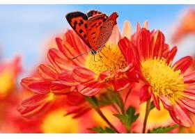 地球,菊花,花,蝴蝶,巨,Bokeh,壁纸,图片