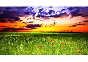 地球,日落,领域,草,艺术的,罂粟,云,壁纸,