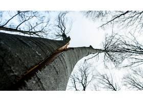 地球,树,树,使分离,树,自然,森林,壁纸,(1)图片