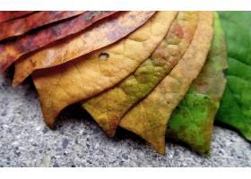 地球,叶子,壁纸,(56)