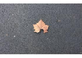 地球,叶子,自然,小路,壁纸,图片