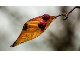 地球,叶子,自然,浆果,壁纸,图片