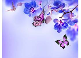 地球,兰花,花,花,蝴蝶,蓝色,花,壁纸,图片