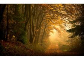 地球,森林,壁纸,(56)