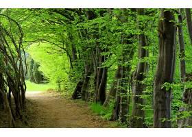 地球,森林,自然,风景,树,壁纸,图片