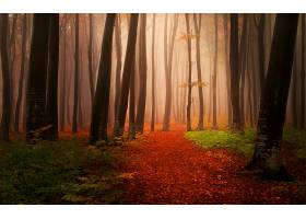 地球,森林,雾,自然,树,秋天,壁纸,图片