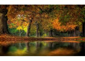 地球,秋天,叶子,树,自然,风景,壁纸,图片