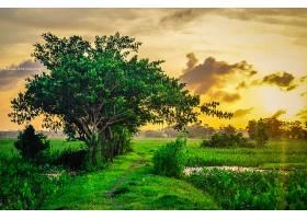 地球,风景,树,日落,领域,壁纸,图片