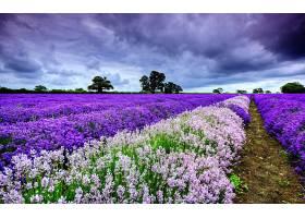 地球,淡紫色,花,花,领域,自然,弹簧,风景,云,壁纸,