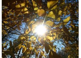 地球,阳光,壁纸,(176)