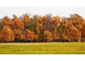 地球,秋天,树,自然,风景,壁纸,图片