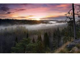 地球,风景,自然,日落,青蛙,森林,天空,壁纸,图片