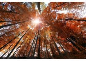 地球,秋天,自然,森林,树,阳光,壁纸,图片