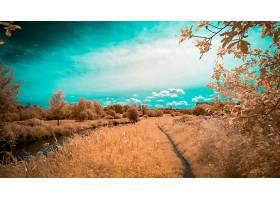 地球,风景,自然,河,小路,云,树,壁纸,图片