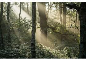 地球,阳光,壁纸,(240)