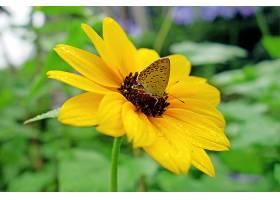 地球,花,花,巨,蝴蝶,雨点,Bokeh,壁纸,图片
