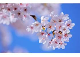地球,花,花,树,花,弹簧,快活的,自然,壁纸,图片