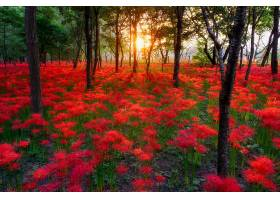 地球,阳光,自然,森林,日落,直接热轧制,花,树,红色,花,壁纸,图片