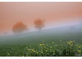 地球,雾,弹簧,自然,风景,树,壁纸,图片