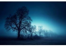 地球,雾,树,早晨,自然,风景,壁纸,图片